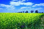 Просто красиво! Украина 2008 г. Жалко, если эта красота достанется НАТО